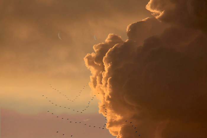 A tribe of reys in V-formation, gliding down from the orange cloud tops of planet Jopitar, illuminated from the left by a setting sun, two crescent moons visible in the background